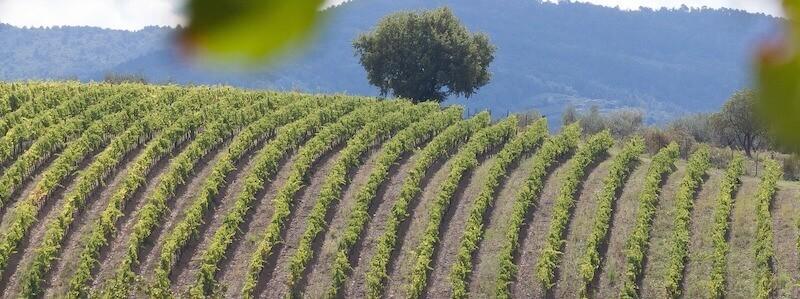 Fransk vinmark